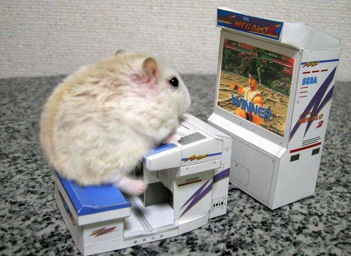 Só queria um hamsterzinho ;-;