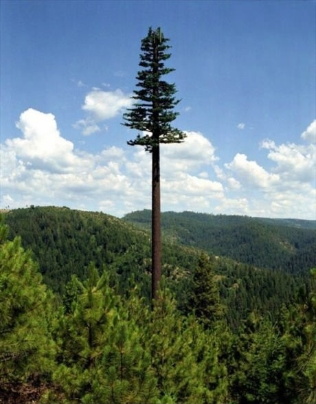 Por mais incrível que pareça a árvore enorme ali é uma antena de celular disfarçada para não estragar a paisagem!
