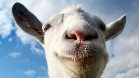 20823568_goat1280_medium